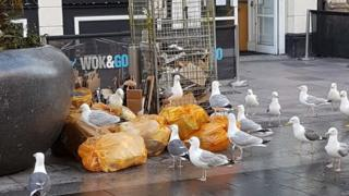 Gulls attacking bins on St Mary Street, Cardiff