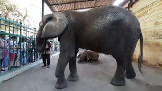 """الفيلة """"نعيمة"""""""