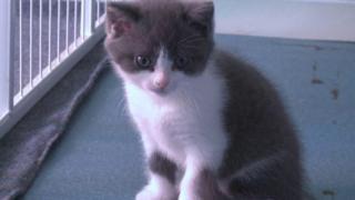 Filhote de gato que é clone de outro animal