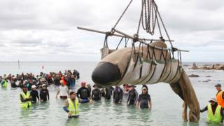 A rescued whale is being lifted by crane to deeper waters so it can escape back to sea