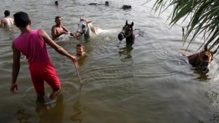 Egyptians swim with horses at a lake, in Cairo, Egypt, 12 July 2017.