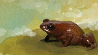 La rana roja de ojos grandes