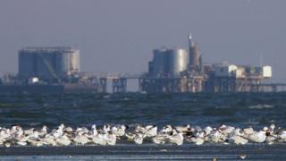 Birds and industry (c) Ken Rosenberg