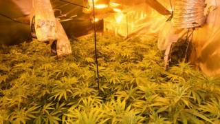 Cannabis with an estimated value of £125k was uncovered in Limavady on Wednesday