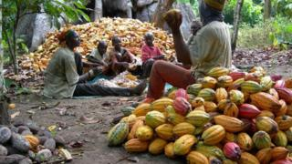 A woman and some pikins with some men dey process the cocoa seeds