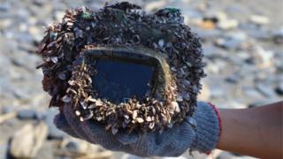 Capa de câmera cheia de crustáceos