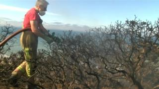 Firefighter putting out wildfire at Cromer Cliffs