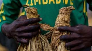Le volume des ventes de tabac a atteint un nouveau record cette année, au Zimbabwe.