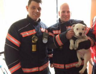 Puppy with fire fighters