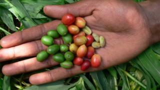 Café da Etiópia