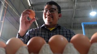 Bisnis telur
