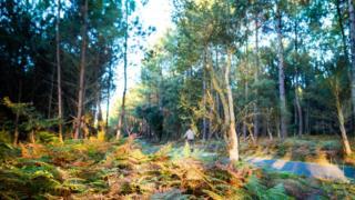 Como a Europa multiplicou suas florestas (e por que isso pode ser um problema)