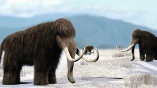 แมมมอธขนยาวมีชีวิตอยู่ในยุคน้ำแข็งครั้งล่าสุดและสูญพันธุ์ไปเมื่อ 4,000 ปีก่อน