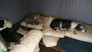 Some of the dogs seized