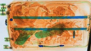 Escaneo de una maleta con reptiles en Ámsterdam