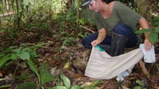 Ana Cristina Mendes de Oliveira fazendo soltura de animal na Amazônia