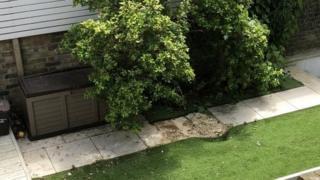 The garden where the body landed