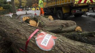 Tree felling in Sheffield