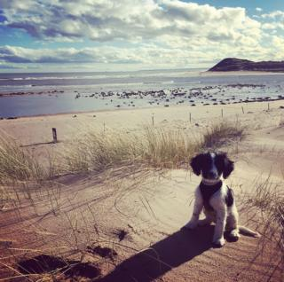 Puppy, Ellie, and hundreds of seals at Newburgh, Aberdeenshire