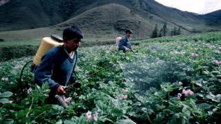 Crop spraying in Peru