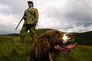 Grouse shooter with a gun dog