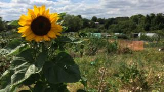Images Council discusses car park plan for Twyford allotments - BBC News 1