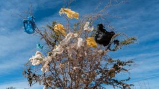 Plastic bags are stuck on a thorny bush in San Pedro de Atacama, Chile