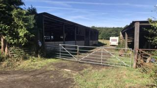 Farmer 'killed by cattle' police say