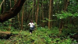 જંગલની તસવીર