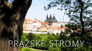 Website of the Prazske Stromy (Prague Trees) site