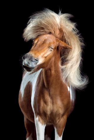 A horse shaking its head and mane