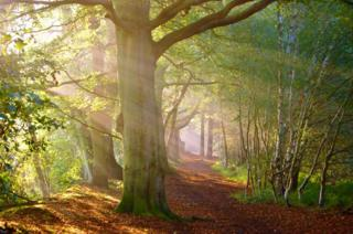 A forest dappled by light.