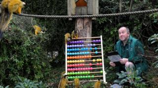 Zookeeper Tony Cholerton sits amongst Squirrel Monkeys
