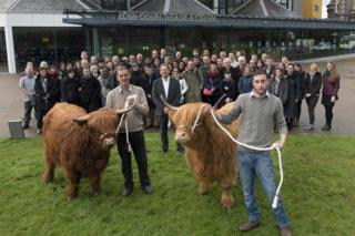 Delegates and Highland cattle at Eden Court in Inverness