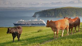 Chris Reekie took this photo above Nigg overlooking the Cromarty Sutor, with the calves watching the departing Cruise ship, Mein Schiff 3, from Invergordon.