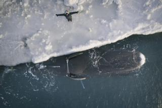 Flora Aiken gives a silent blessing to the first bowhead whale of the spring season.