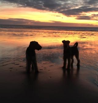 Drea and Lola on Carnoustie beach at sunrise