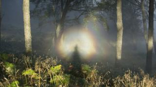 broken spectre in the trees