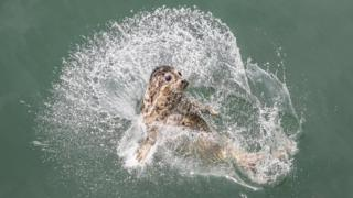 A spotted seal is released into the sea in Dalian, northeast China's Liaoning Province, May 10, 2019.