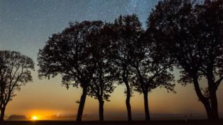 A picture of silhouetted trees against a Leonid meteor shower