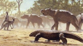 """""""هجرة سنوية"""" للدببة الأسترالية العملاقة قبل 40 ألف عام"""