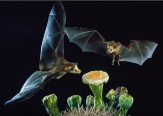 Dos murciélagos en una flor