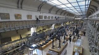 Fósseis expostos no Museu de História Natural de Paris