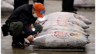 A wholesaler inspects frozen tuna before the first auction of the year at the Tsukiji fish market