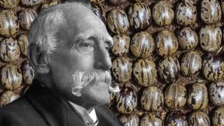 Henry Wickham y semillas de árbol de caucho