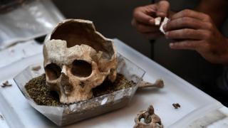 Ископаемый череп