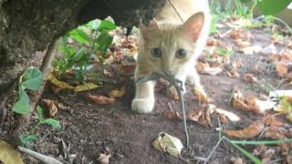 Gato em Fernando de Noronha