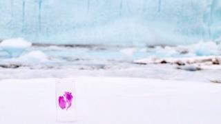 Simone Giertz's brain tumour 'Brian' in Antarctica