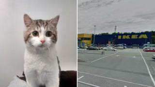 Vinnie the kitten and Ikea in Thurrock