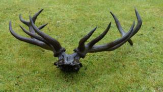 4,000-year-old dear skull and antlers